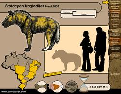 Protocyon troglodites