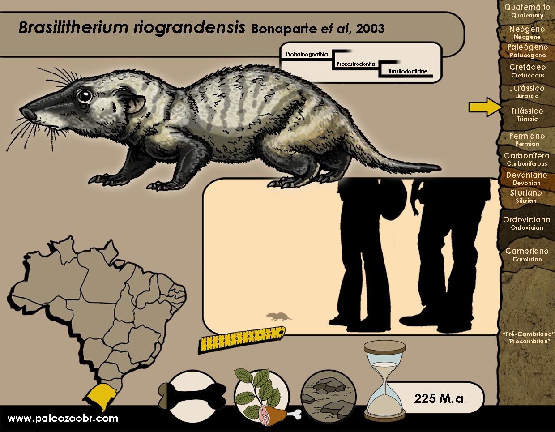 Brasilitherium riograndensis