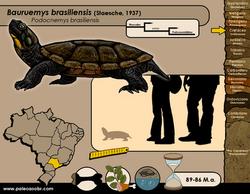 Bauruemys brasiliensis