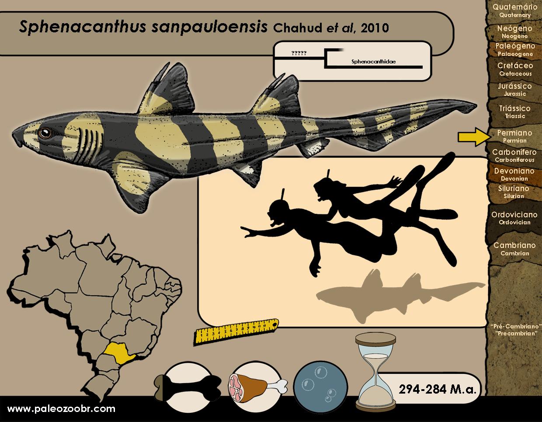 Sphenacanthus sanpauloensis
