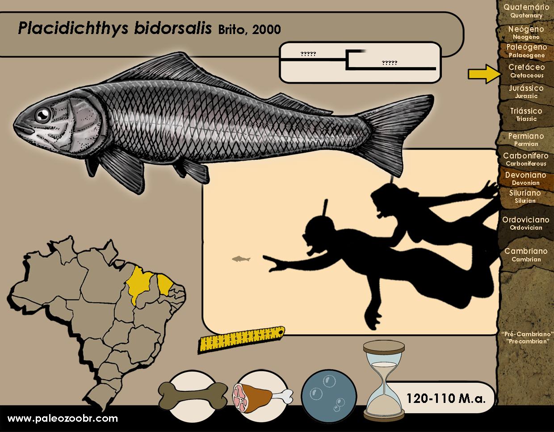 Placidichthys bidorsalis