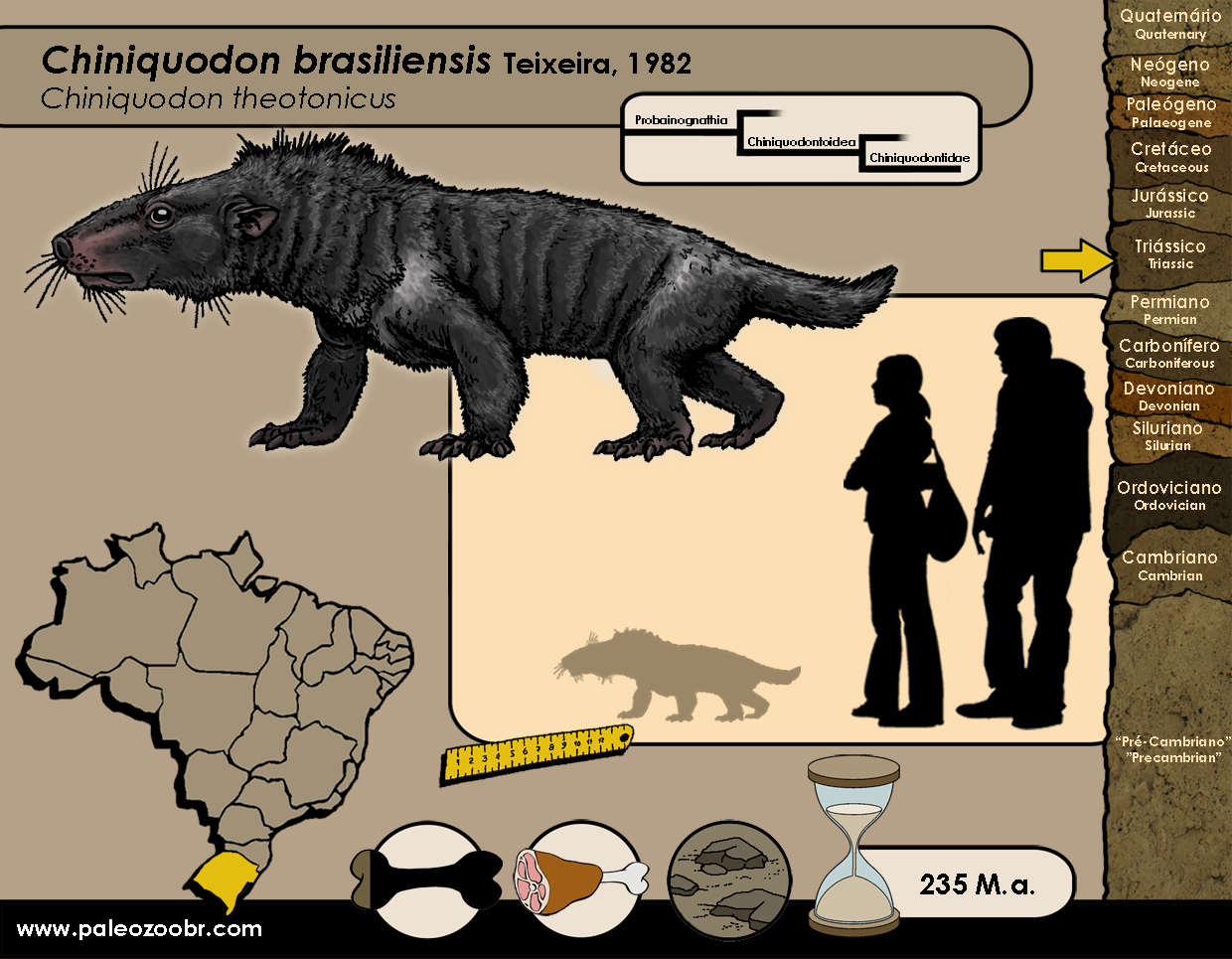 Chiniquodon brasiliensis