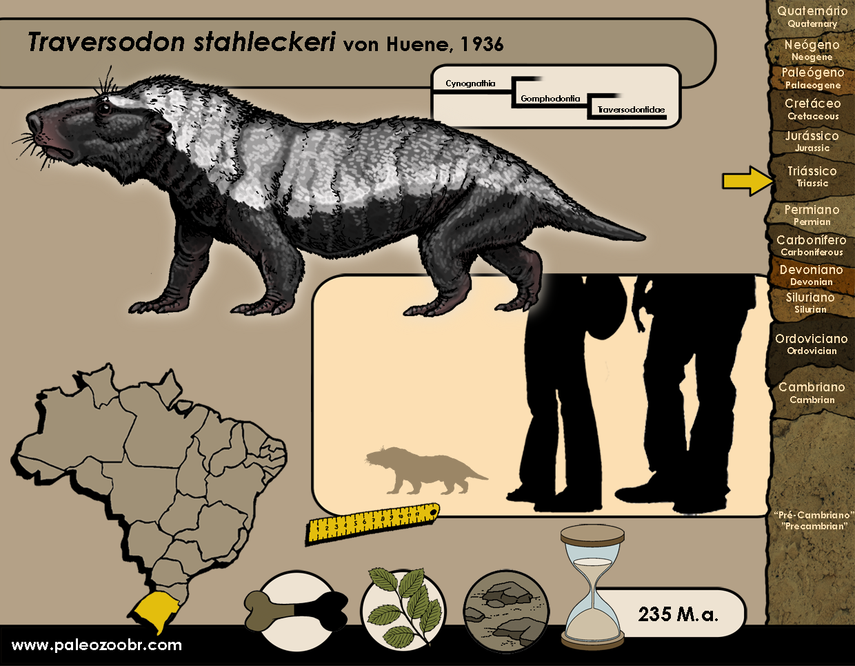 Traversodon stahleckeri
