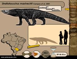 Stratiotosuchus maxhechti