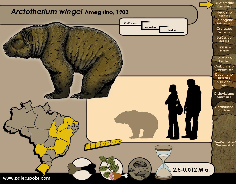Arctotherium wingei