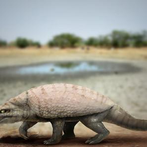 "18 - Adailson Ramos Gouveia 'Armadillosuchus (crocodilo tatu)"" (Pintura Digital) Armadillosuchus arrudai. ou conhecido como crocodilo tatu."