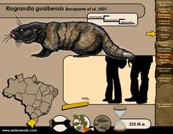 Riograndia guaibensis