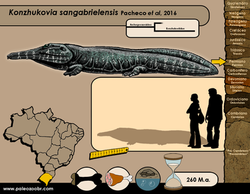 Konzhukovia sangabrielensis