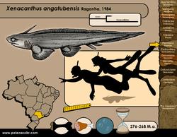 Xenacanthus angatubensis