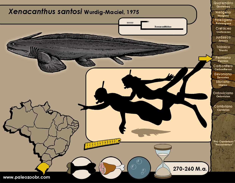 Xenacanthus santosi