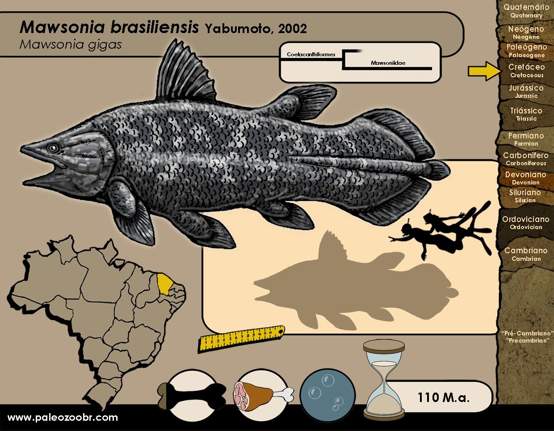 Mawsonia brasiliensis