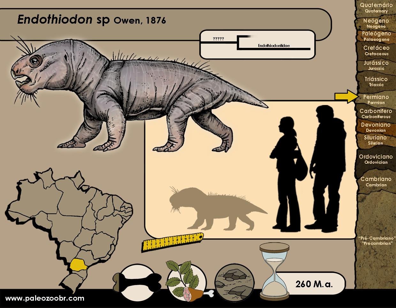 Endothiodon sp