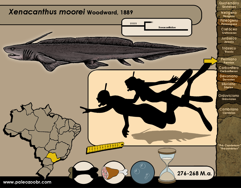Xenacanthus moorei