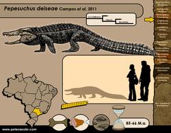 Pepesuchus deiseae