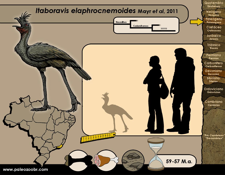 Itaboravis elaphrocnemoides