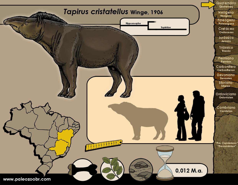 Tapirus cristatellus