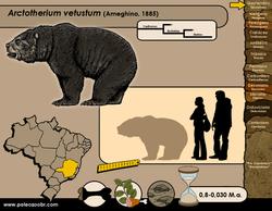Arctotherium vetustum
