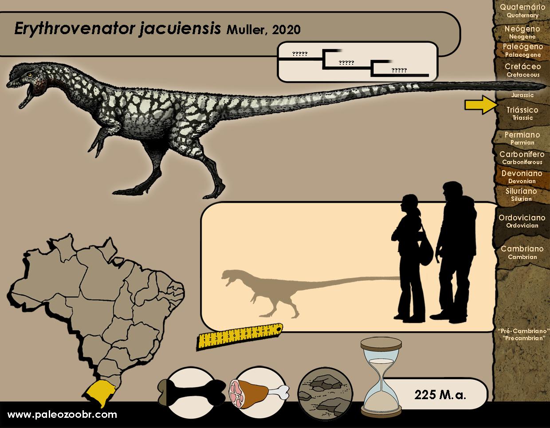 Erythrovenator jacuiensis