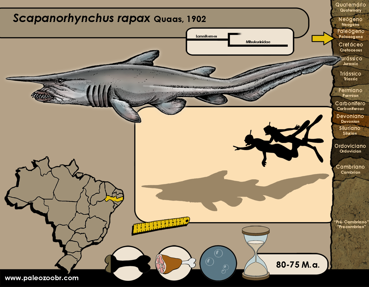 Scapanorhynchus rapax