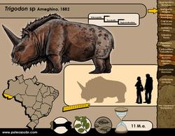 Trigodon sp