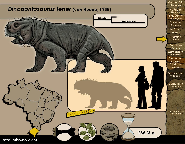 Dinodontosaurus tener