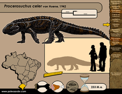 Procerosuchus celer