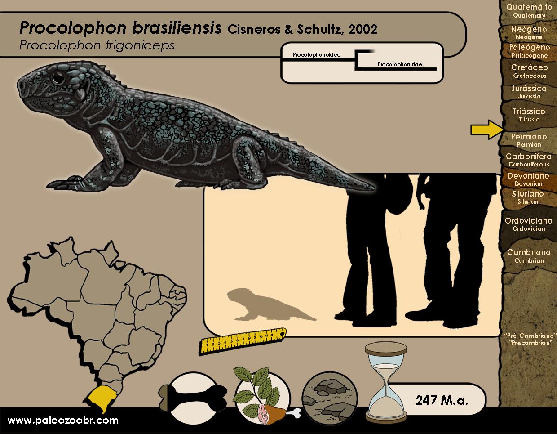 Procolophon brasiliensis