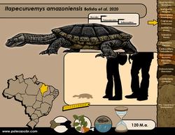 Itapecuruemys amazoniensis