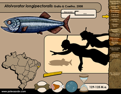 Atolvorator longipectoralis