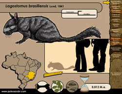 Lagostomus brasiliensis