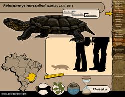 Peiropemys mezzalirai