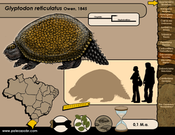 Glyptodon reticulatus