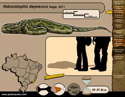 Itaboraiophis depressus