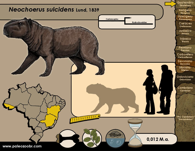 Neochoerus sulcidens
