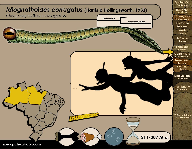 Idiognathoides corrugatus