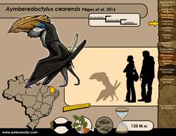 Aymberedactylus cearensis