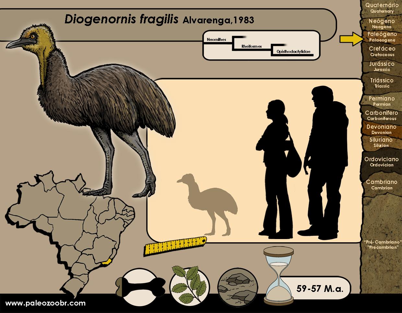 Diogenornis fragilis