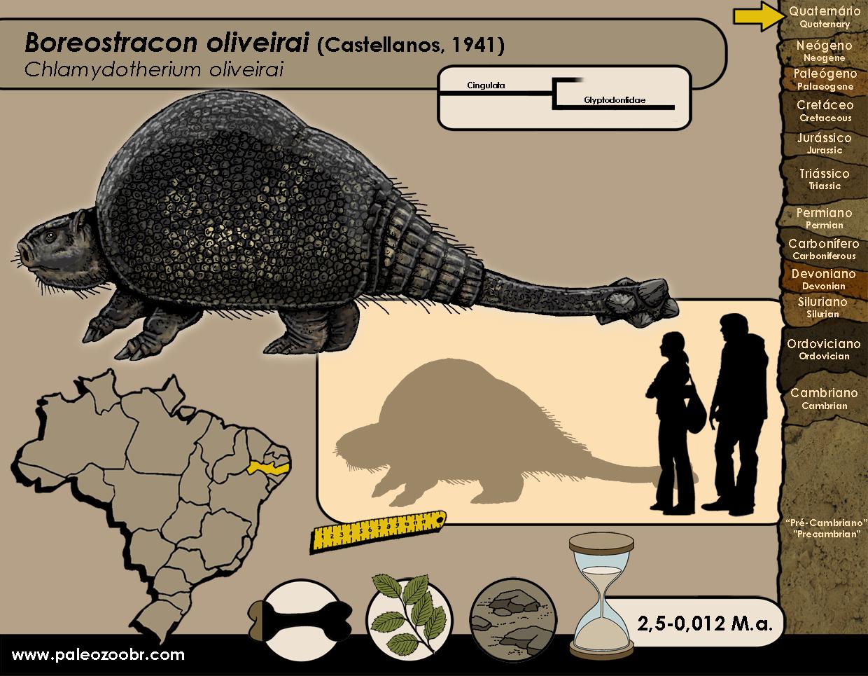 Boreostracon oliveirai