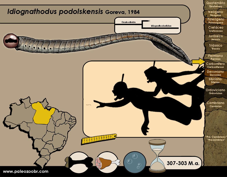 Idiognathodus podolskensis