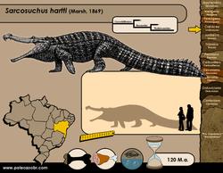 Sarcosuchus hartti