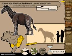 Xenorhinotherium bahiensis