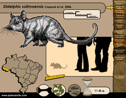 Didelphis solimoensis