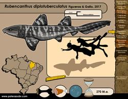 Rubencanthus diplotuberculatus