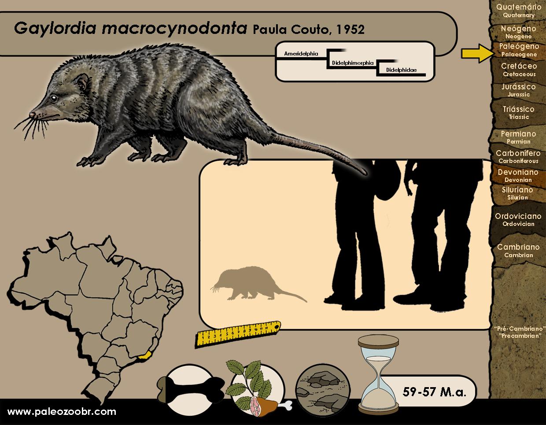 Gaylordia macrocynodonta
