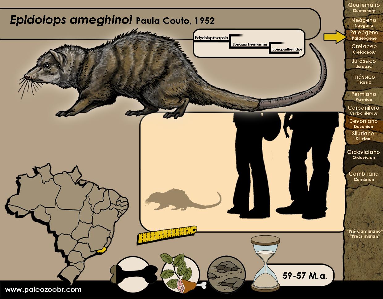 Epidolops ameghinoi