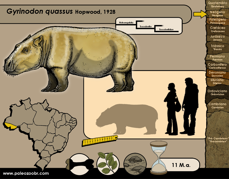 Gyrinodon quassus