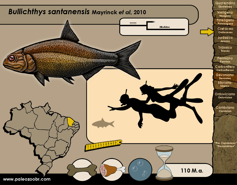 Bullichthys santanaensis