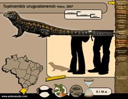 Tupinambis uruguaianensis