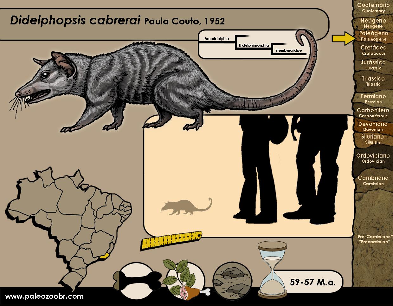 Didelphopsis cabrerai