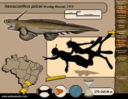 Xenacanthus pricei
